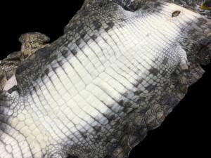 クロコダイルの原皮