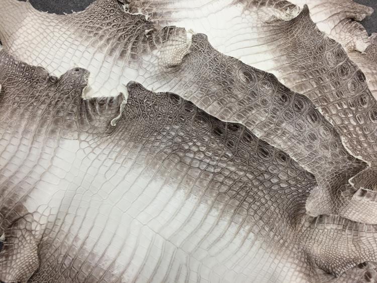 ヒマラヤクロコダイル革