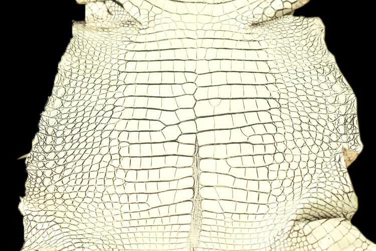 バニラ加工(目地染め)のクロコダイル革