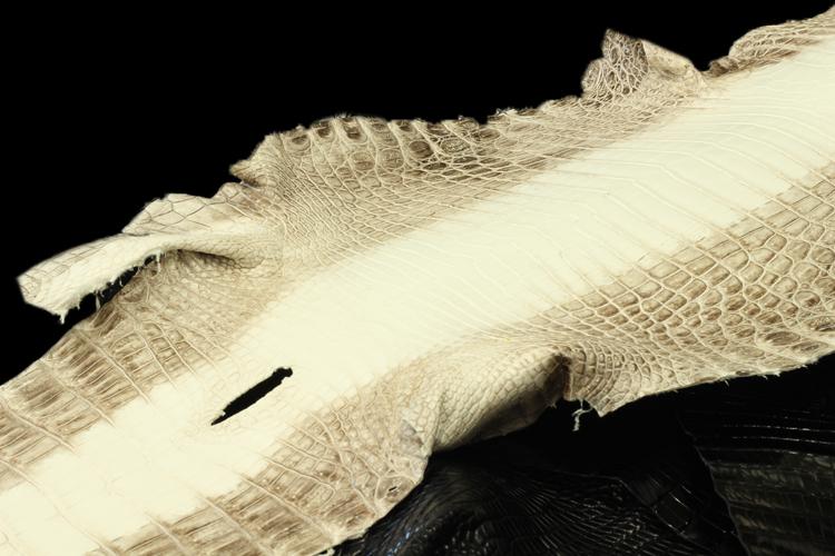 ヒマラヤ加工のクロコダイル革