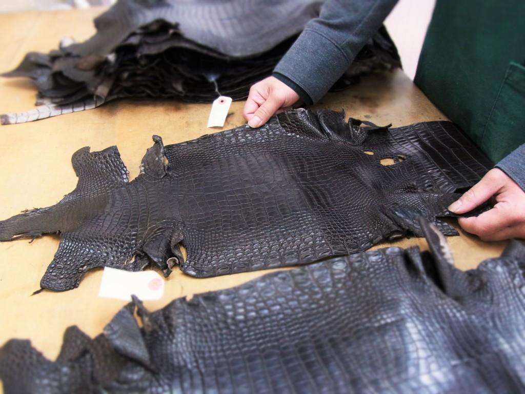 クロコダイル革の選別