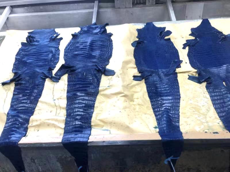 藍染クロコダイル